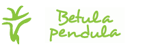 BETULA PENDULA s.r.o.